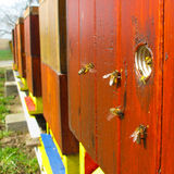 Bees and hive. Bees carrying pollen back to hive stock photography