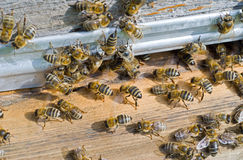 Bees on hive 22 Royalty Free Stock Image