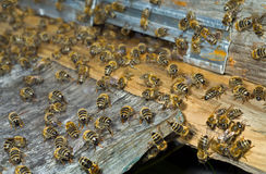 Bees on hive 5 Stock Photo