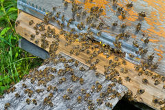 Bees on hive 6 Royalty Free Stock Image