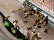 Bees hive Stock Photo