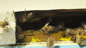 The bees in the hive stock footage