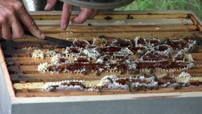 Bees on hive stock video