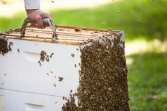 Bees on hive Stock Images