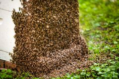 Bees on hive Royalty Free Stock Photos