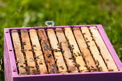 Bees on a hive Stock Photo