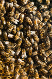 Bees in hive Stock Photos