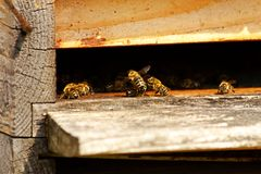 Bees in the hive Stock Images