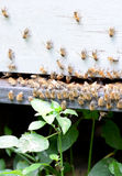 Bees on hive Stock Photos