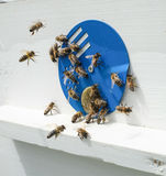 Bees and hive Royalty Free Stock Image