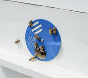 Bees and hive Royalty Free Stock Photography