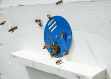 Bees and hive stock photo