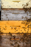 Bees in a hive at Provence Stock Photography