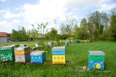 Hive in a meadow. Bees in hives produce sweet honey Royalty Free Stock Photos