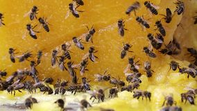 Bees and honey Stock Photography