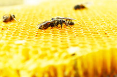 Bees honey cells Royalty Free Stock Images