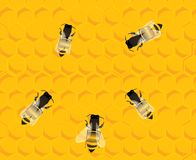 Bees on honey hive background Royalty Free Stock Photo