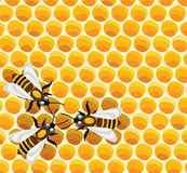 Bees on honeycells Royalty Free Stock Images