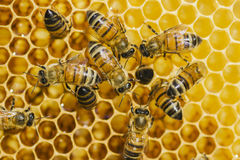 Bees on honeycomb in apiary. In the summertime Stock Photos
