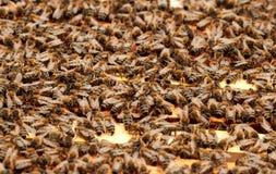 Bees Royalty Free Stock Photos