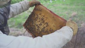Bees on honeycomb. Honey harvest. Beekeeper gently removes bees from the frame. apiary macro. hd. Bees on honeycomb. Honey harvest. Beekeeper gently removes bees stock footage