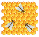 Bees and Honeycomb. Three honeybees with transparent wings on a beautiful yellow background, consisting of hundreds of hexagonal cells Stock Photography