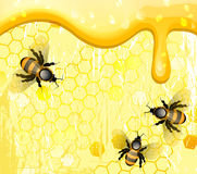 Bees on honeycomb. Vector illustration Stock Images