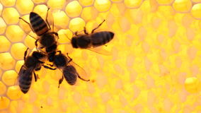 Bees on honeycomb stock video footage