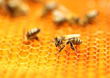 Bees on honeycomb. Bees workers on honeycomb, blurred backgorund Royalty Free Stock Image