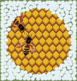 Bees on honeycombs. Raster illustration of bees on honeycombs surrounded by flowers Stock Photos
