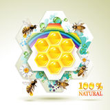 Bees and honeycombs Stock Photography
