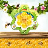 Bees and honeycombs Royalty Free Stock Photo