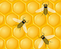 Bees and honeycombs vector illustration