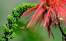Bees hovering among the flowers Stock Images