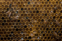 Bees inside beehive macro close up Royalty Free Stock Photos