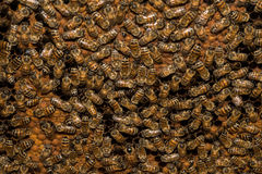 Bees inside beehive macro close up Royalty Free Stock Image