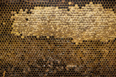 Bees inside beehive macro close up Stock Images