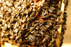Bees inside a beehive with the queen bee in the middle Stock Image