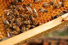Bees inside a beehive with the queen bee in the middle Stock Photo