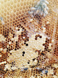 Bees inside the hive background Royalty Free Stock Images