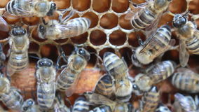 Bees inside hive Royalty Free Stock Images