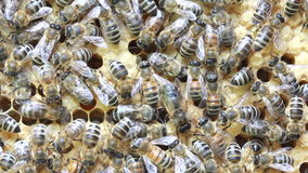 Bees inside hive Stock Photo