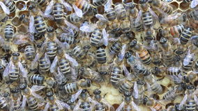 Bees inside hive Royalty Free Stock Photos