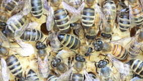 Bees inside hive Stock Image