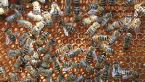 Bees inside hive Royalty Free Stock Photography