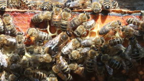 Bees inside hive Stock Photos