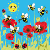 Bees, ladybirds on the meadow. Stock Images