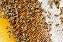Bees make honey. Bees swarm  make honey in bee hive Royalty Free Stock Image