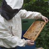 Bees making honey Stock Photography