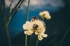 Bees in the mountains. Red glade. Krasnodar region. Mountains of the Caucasus royalty free stock photo